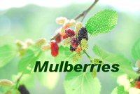 mulberrie_200