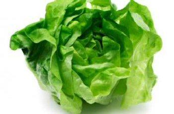 Bibb-Lettuce-Main