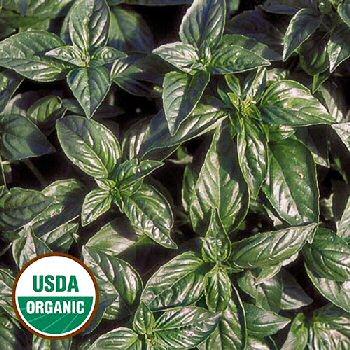 genovese-basil-herb-organic