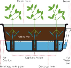 Growing-smarter-self-watering-system-300x285