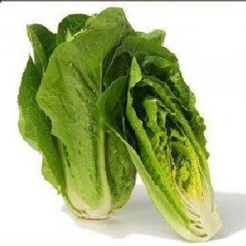 parris-island-cos-lettuce