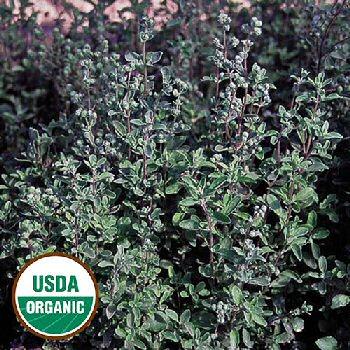 sweet-marjoram-herb-organic