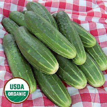 ac-pickling-cucumber-organic