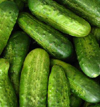 CucumberNationalPickling2.jpg