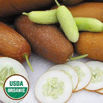 poona-kheera-cucumber-organic