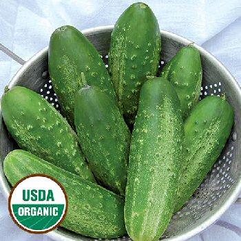 russian-pickling-cucumber-organic
