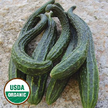 suyo-long-cucumber-organic