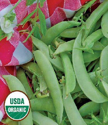 amish-snap-pea-organic