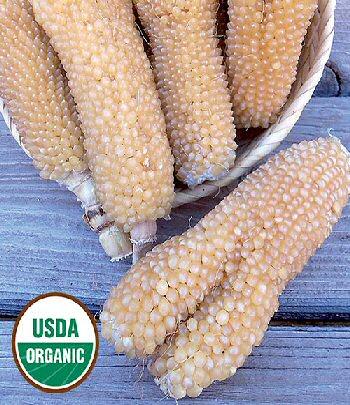 bear-paw-corn-organic