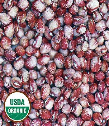 mayflower-bean-organic.jpg