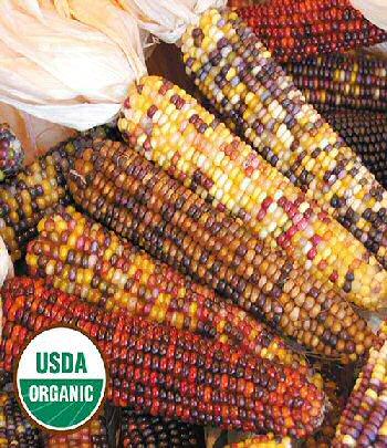 smoke-signals-corn-organic