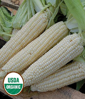 stowells-evergreen-corn-organic