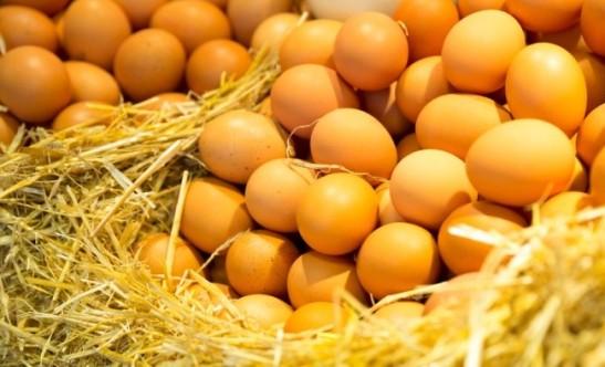 egg-pic