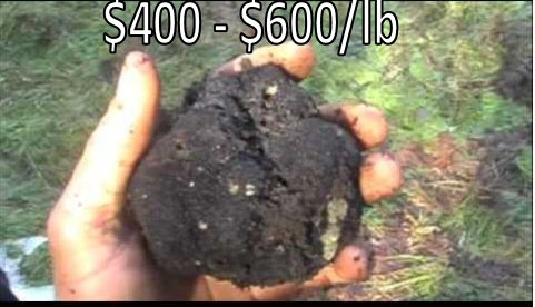 4_truffle