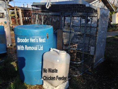 0_brooder-cage_1