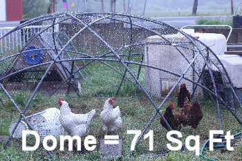 0_new_chickens_350