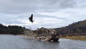 1-eagle