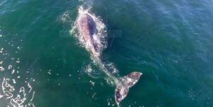 whale_2